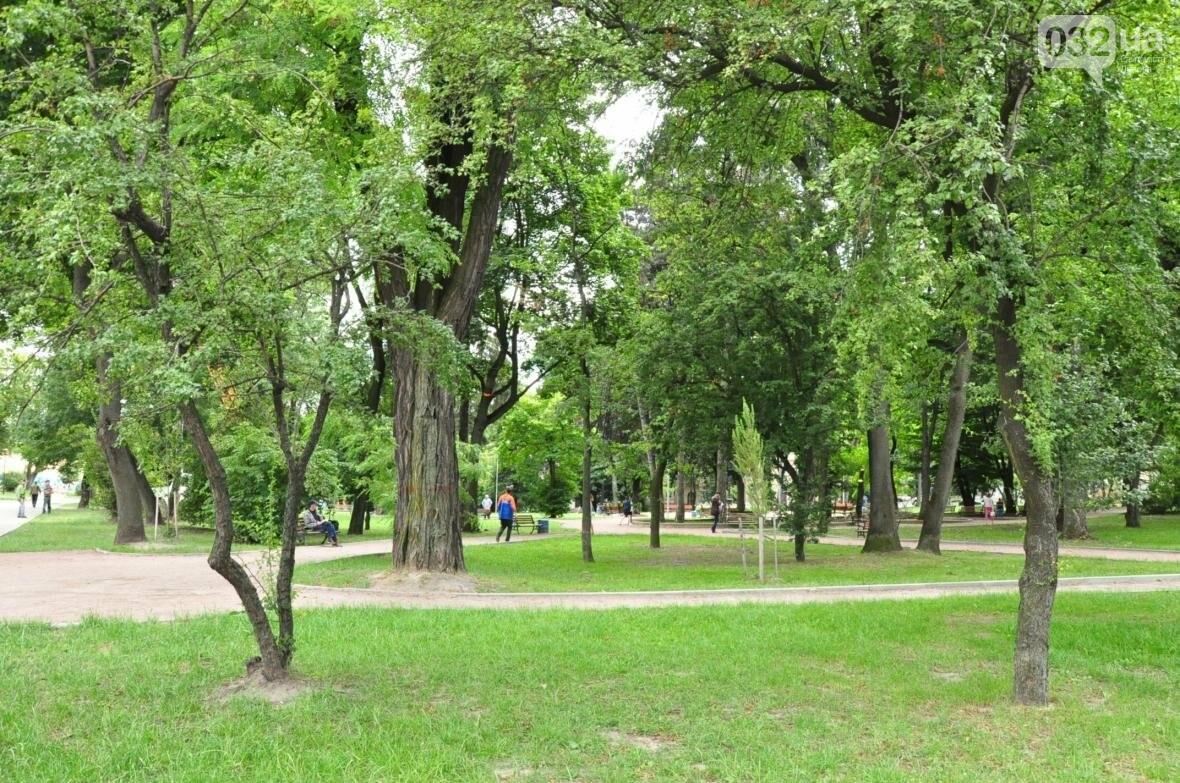 На площі Юра у Львові зрізають сухостій, фото-1