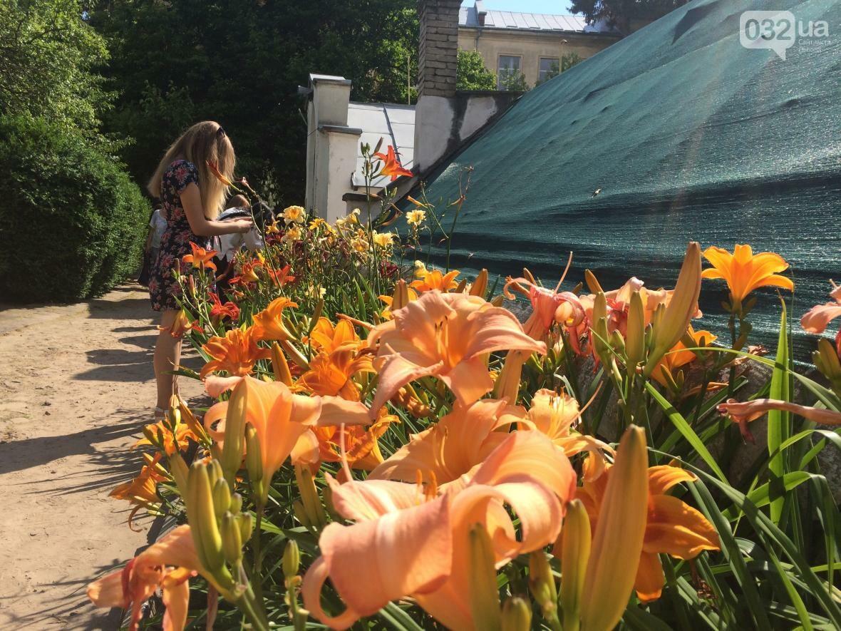 Як у Ботанічному саду проходив День відкритих дверей: фото та відео, фото-6