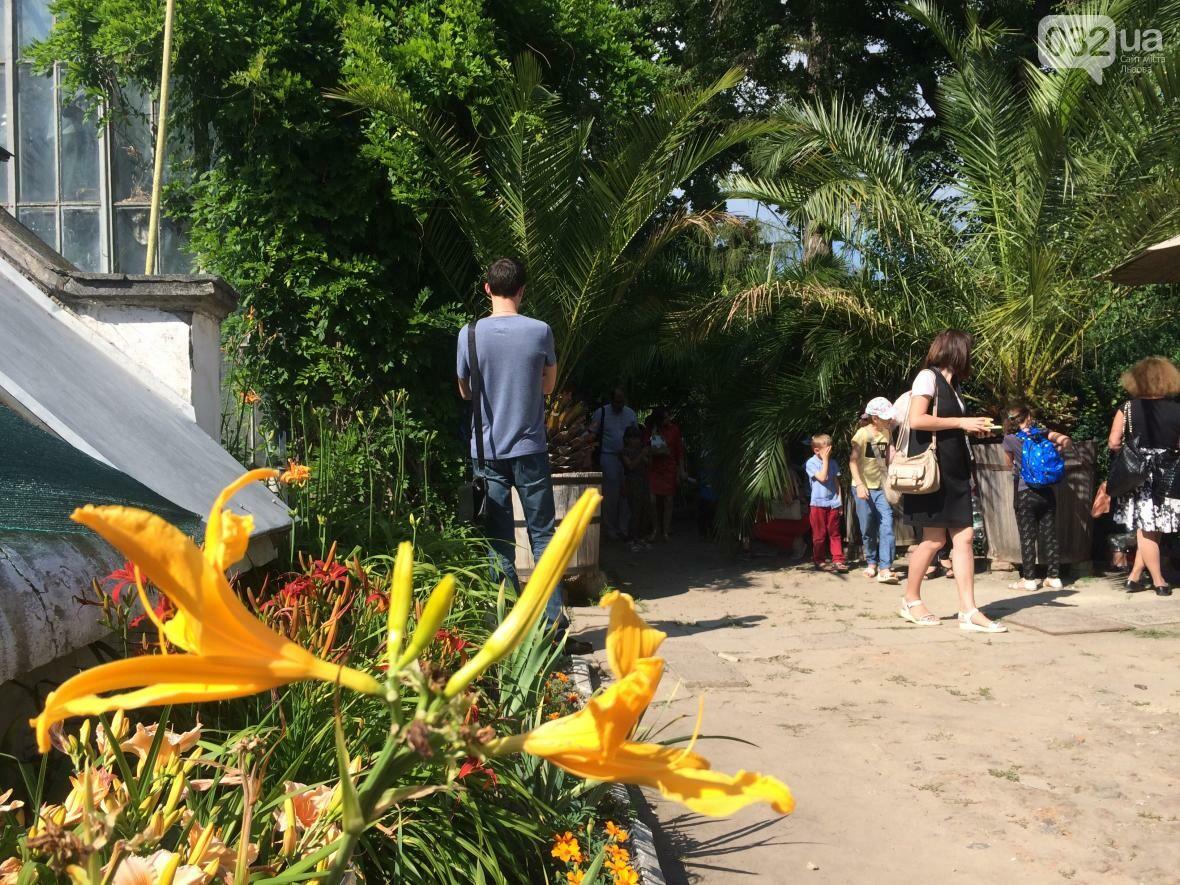 Як у Ботанічному саду проходив День відкритих дверей: фото та відео, фото-7