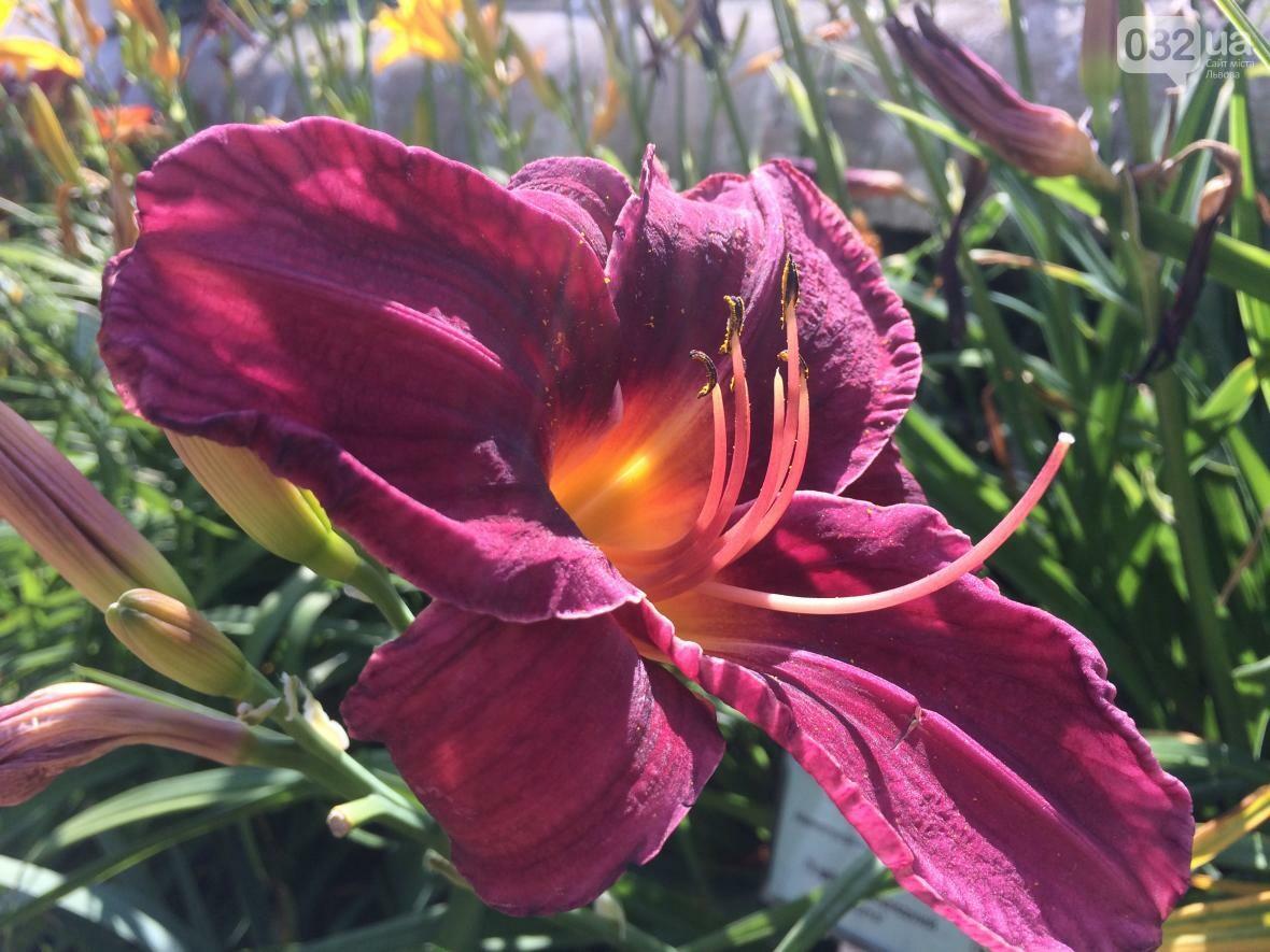 Як у Ботанічному саду проходив День відкритих дверей: фото та відео, фото-3