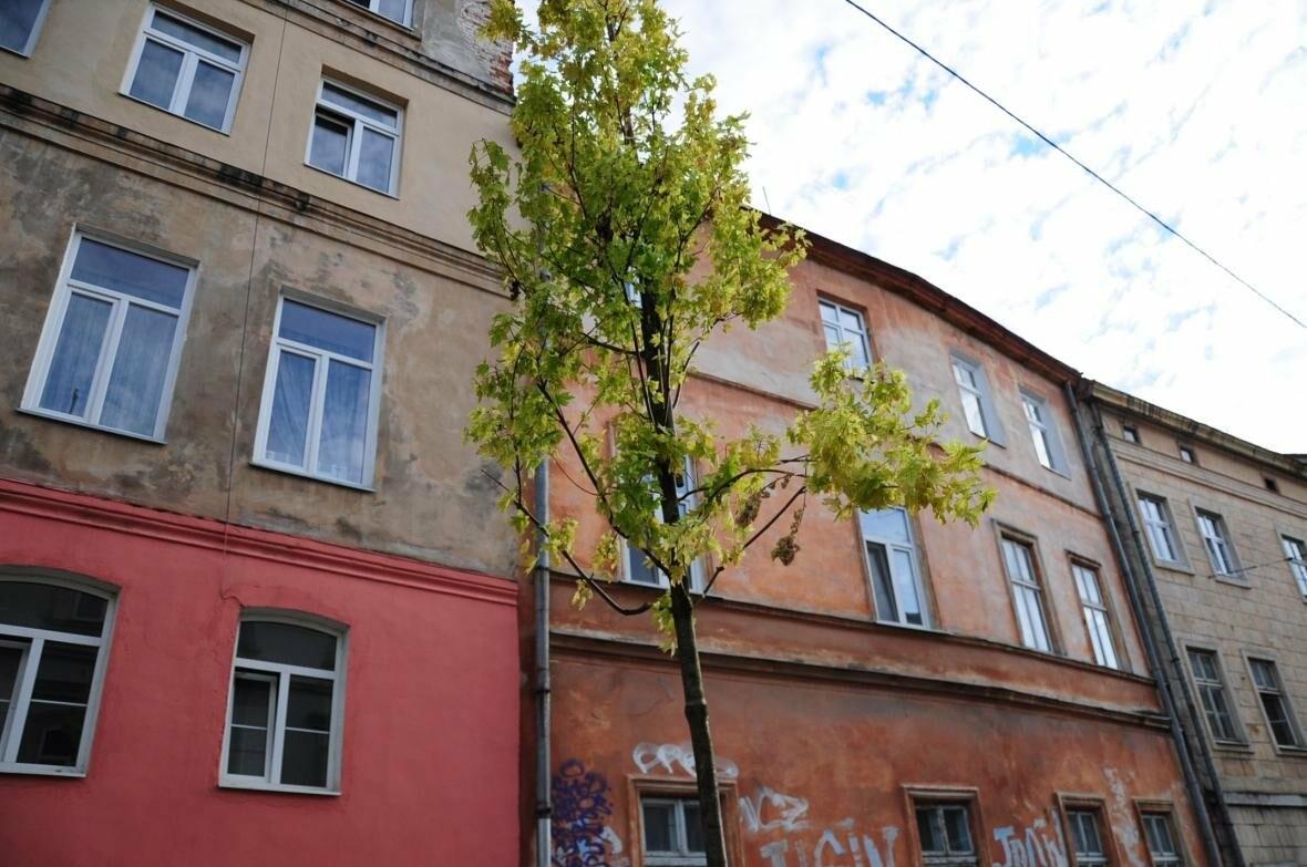 Центральну вулицю Львова озеленили (ФОТО), фото-1