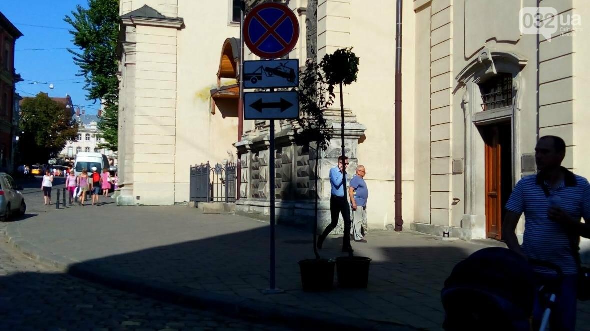 У центрі Львова висадили горщики з кленами (ФОТО), фото-5