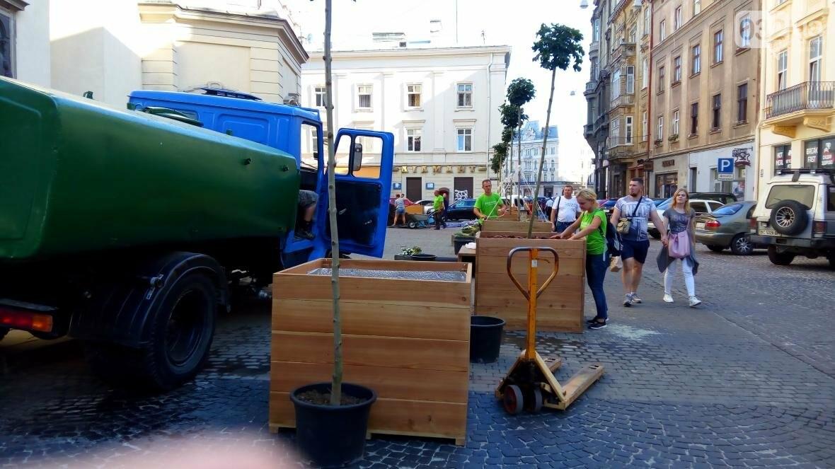 У центрі Львова висадили горщики з кленами (ФОТО), фото-8