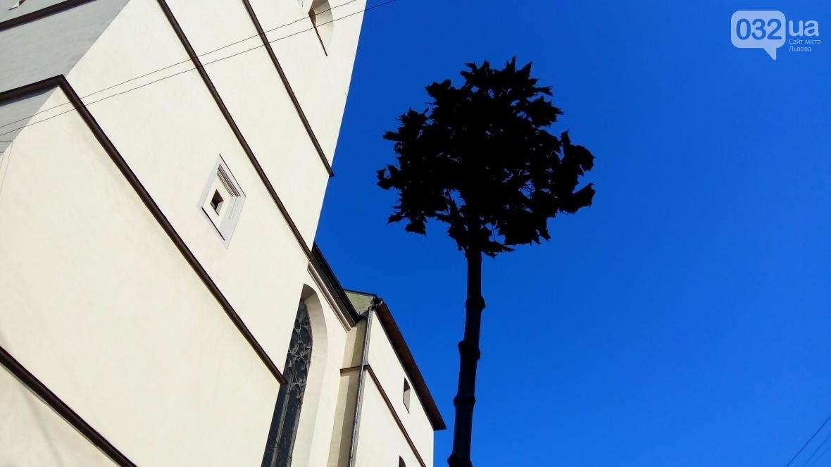 У центрі Львова висадили горщики з кленами (ФОТО), фото-4