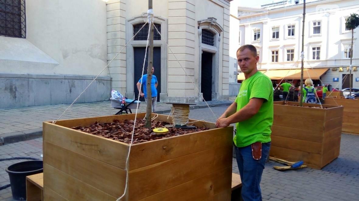 У центрі Львова висадили горщики з кленами (ФОТО), фото-7
