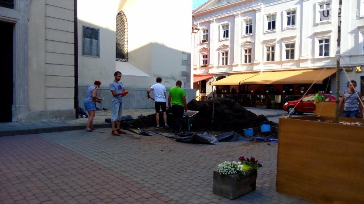 У центрі Львова висадили горщики з кленами (ФОТО), фото-1