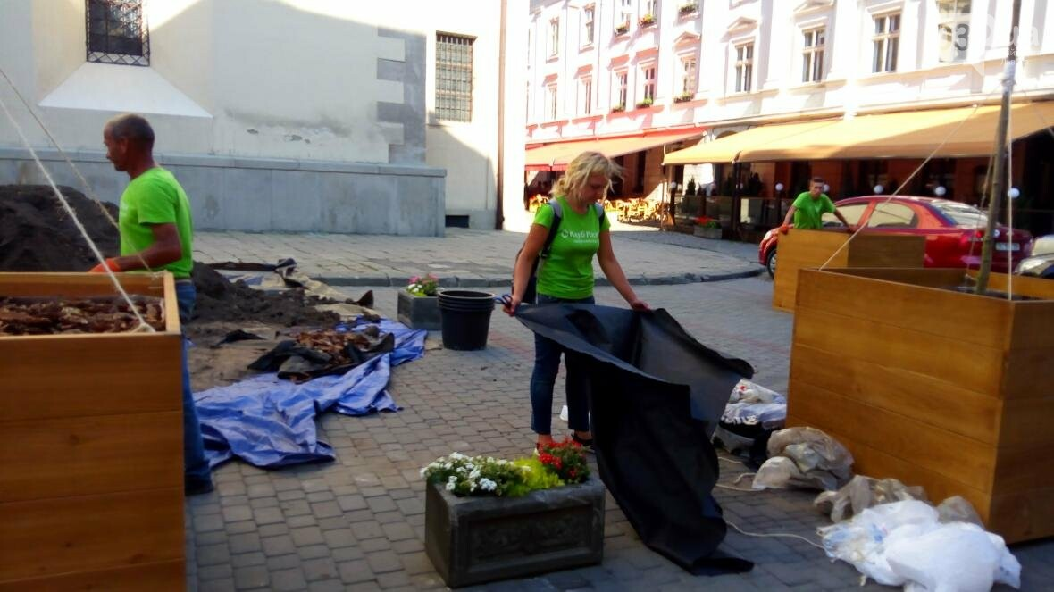 У центрі Львова висадили горщики з кленами (ФОТО), фото-3