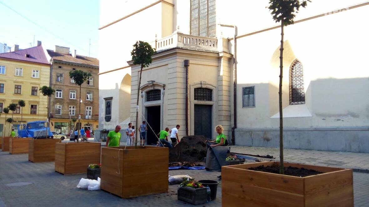 У центрі Львова висадили горщики з кленами (ФОТО), фото-9
