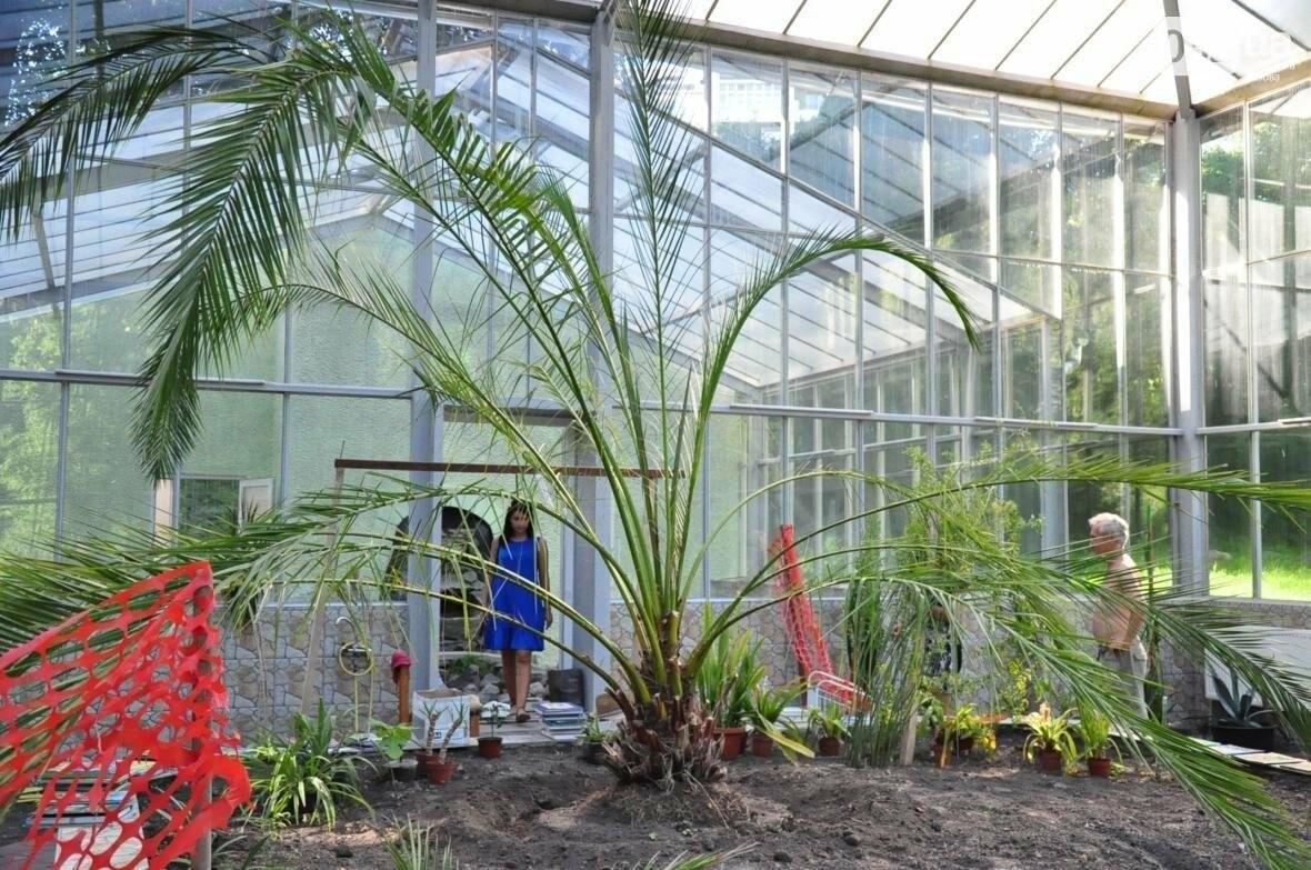 Для оранжереї у Стрийському парку придбають нові екзотичні рослини, фото-3