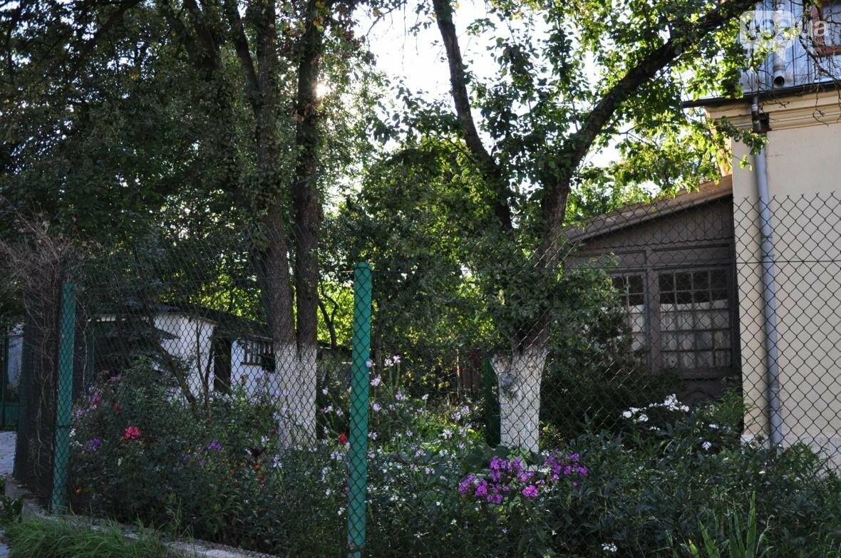 «Залізний» ліс Львова. Снопків, фото-14