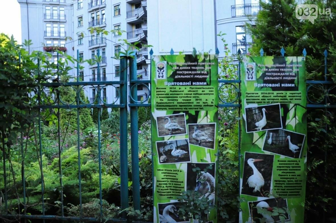 «Залізний» ліс Львова. Снопків, фото-32