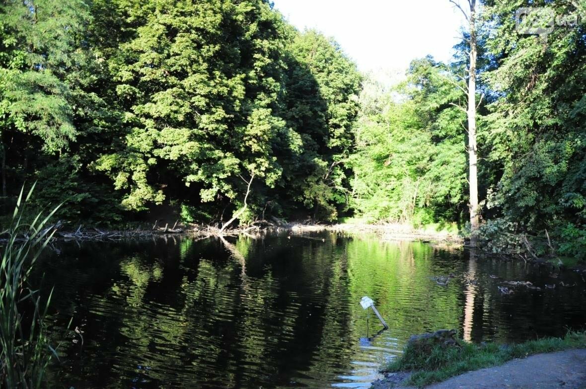 «Залізний» ліс Львова. Снопків, фото-50