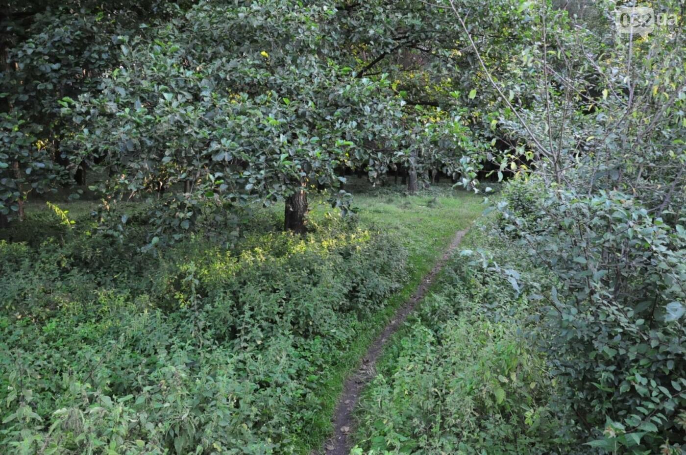 На Білогорщі за 6,5 мільйонів оновлять лісопарк, - ФОТО, фото-4