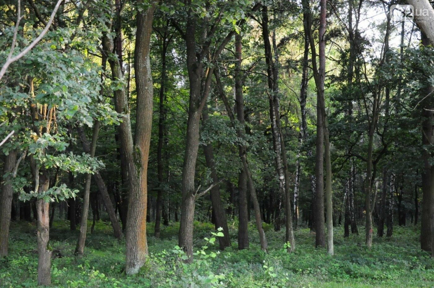На Білогорщі за 6,5 мільйонів оновлять лісопарк, - ФОТО, фото-9