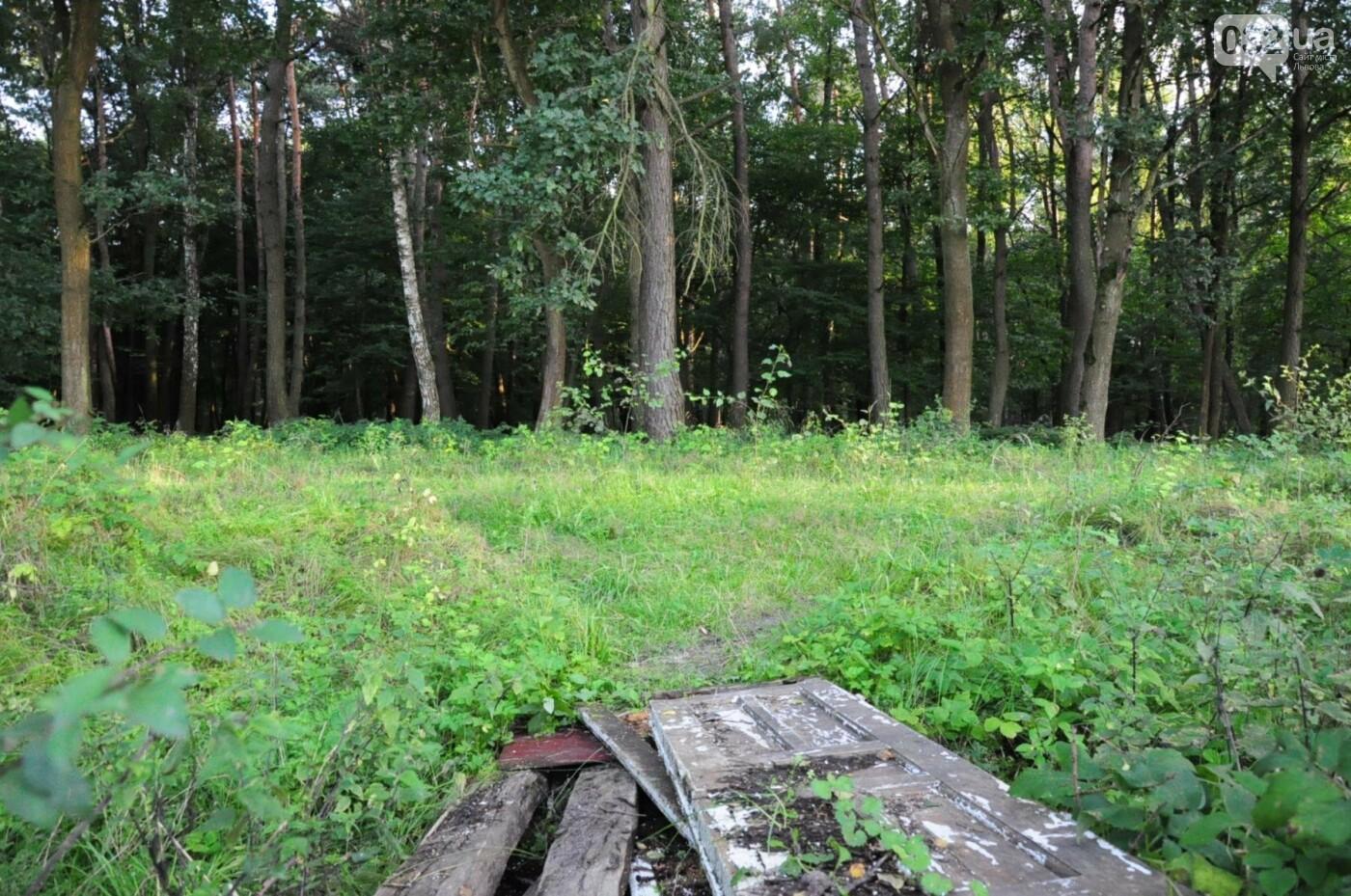 На Білогорщі за 6,5 мільйонів оновлять лісопарк, - ФОТО, фото-8