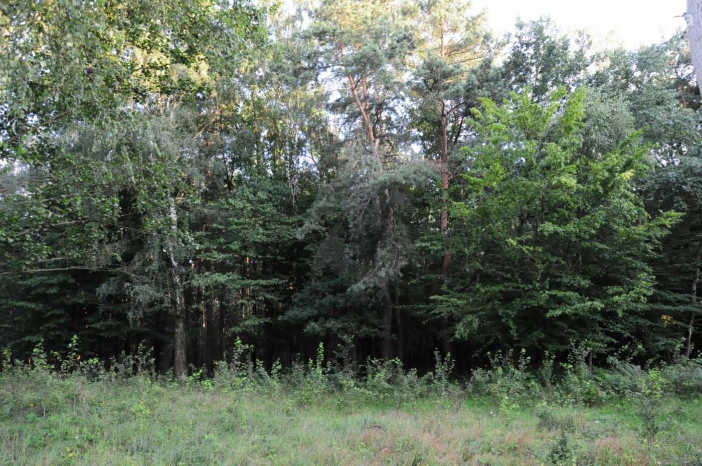 На Білогорщі за 6,5 мільйонів оновлять лісопарк, - ФОТО, фото-6