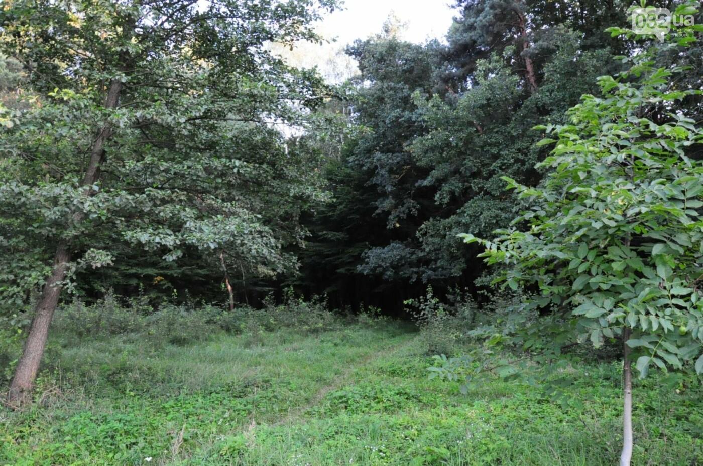 На Білогорщі за 6,5 мільйонів оновлять лісопарк, - ФОТО, фото-7