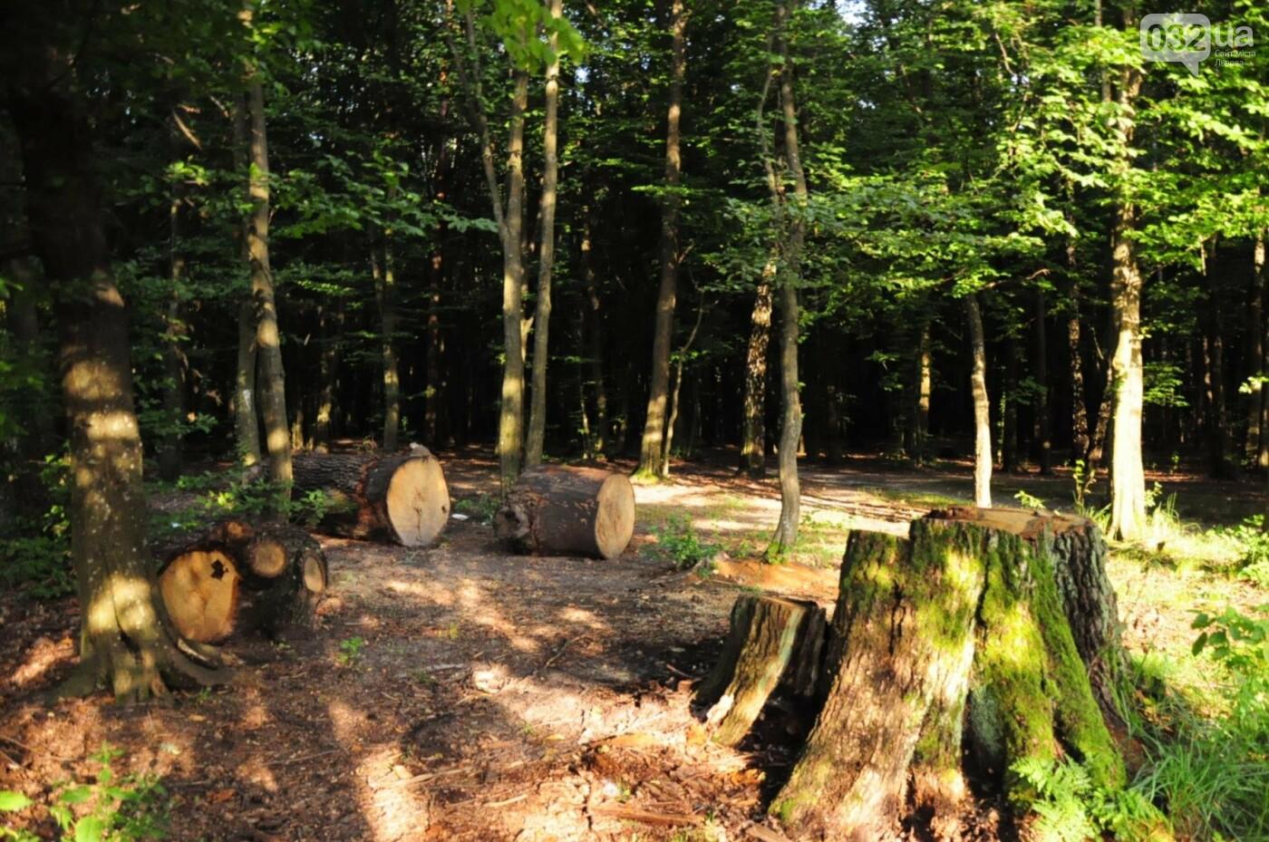 На Білогорщі за 6,5 мільйонів оновлять лісопарк, - ФОТО, фото-12