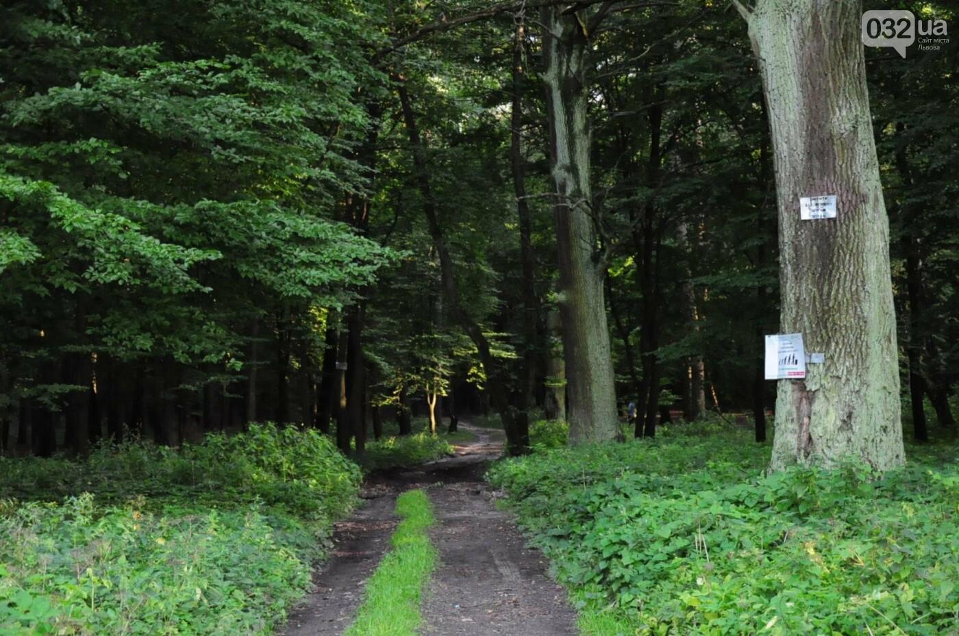 На Білогорщі за 6,5 мільйонів оновлять лісопарк, - ФОТО, фото-11