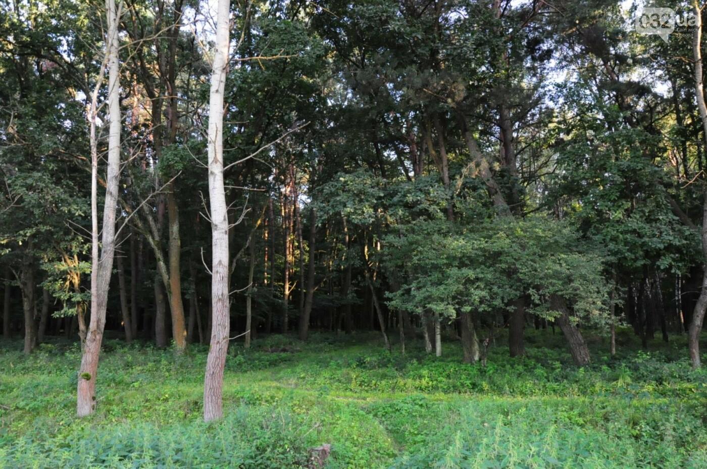 На Білогорщі за 6,5 мільйонів оновлять лісопарк, - ФОТО, фото-10