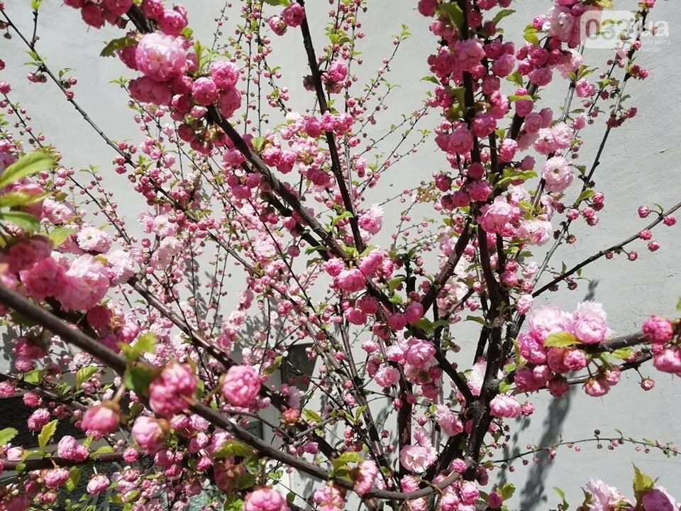 Де у Львові квітнуть сакури, - ІНТЕРАКТИВНА МАПА, ФОТО, фото-9