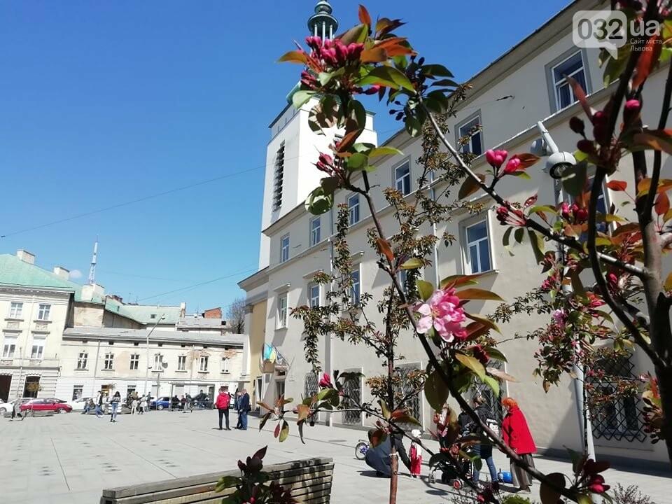Де у Львові квітнуть сакури, - ІНТЕРАКТИВНА МАПА, ФОТО, фото-10