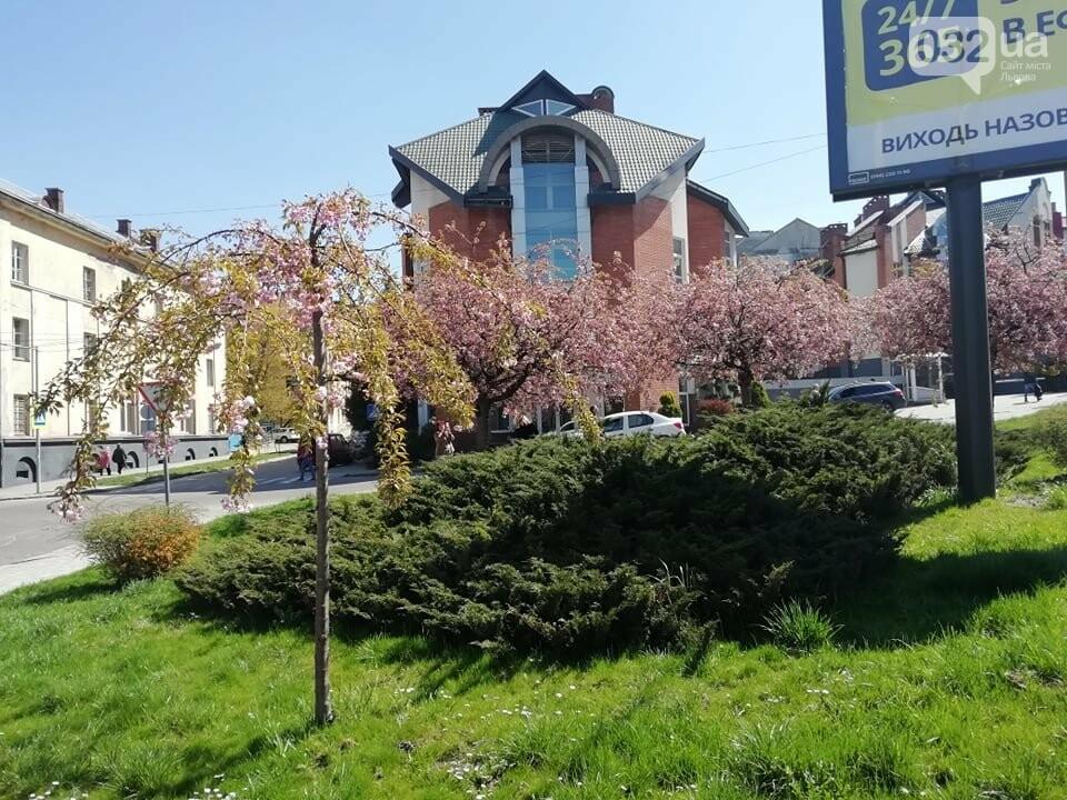 Де у Львові квітнуть сакури, - ІНТЕРАКТИВНА МАПА, ФОТО, фото-6