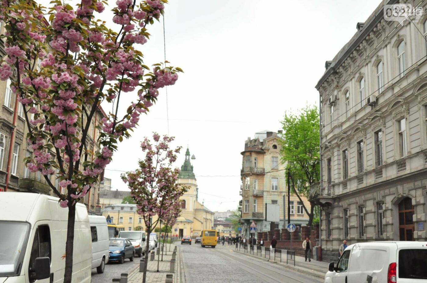 Де у Львові квітнуть сакури, - ІНТЕРАКТИВНА МАПА, ФОТО, фото-12