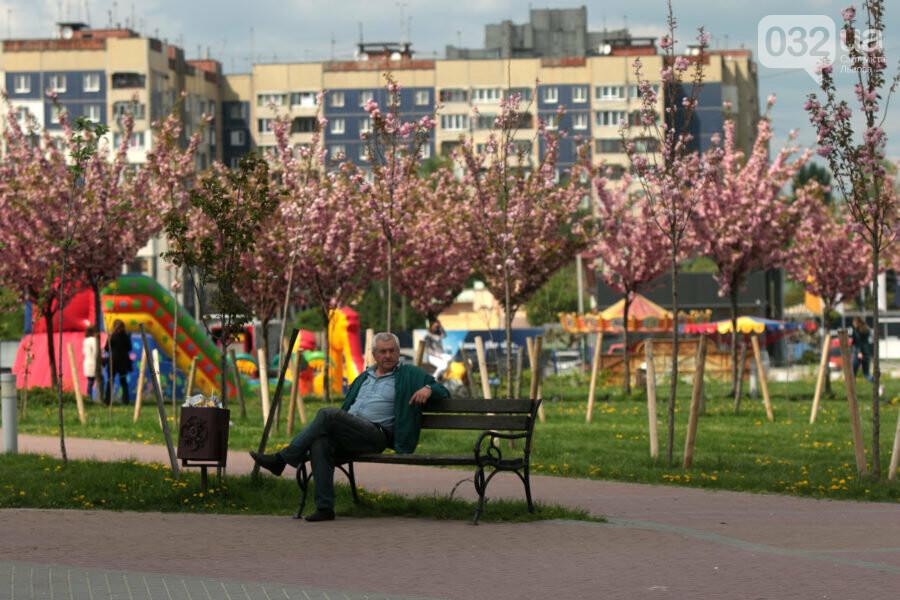Де у Львові квітнуть сакури, - ІНТЕРАКТИВНА МАПА, ФОТО, фото-14, Фото: sykhiv.media