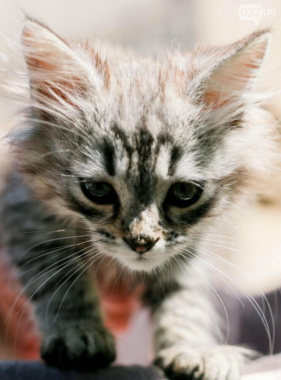 8 милих котиків чекають на добрих господарів у Домівці врятованих тварин, - ФОТО, фото-4
