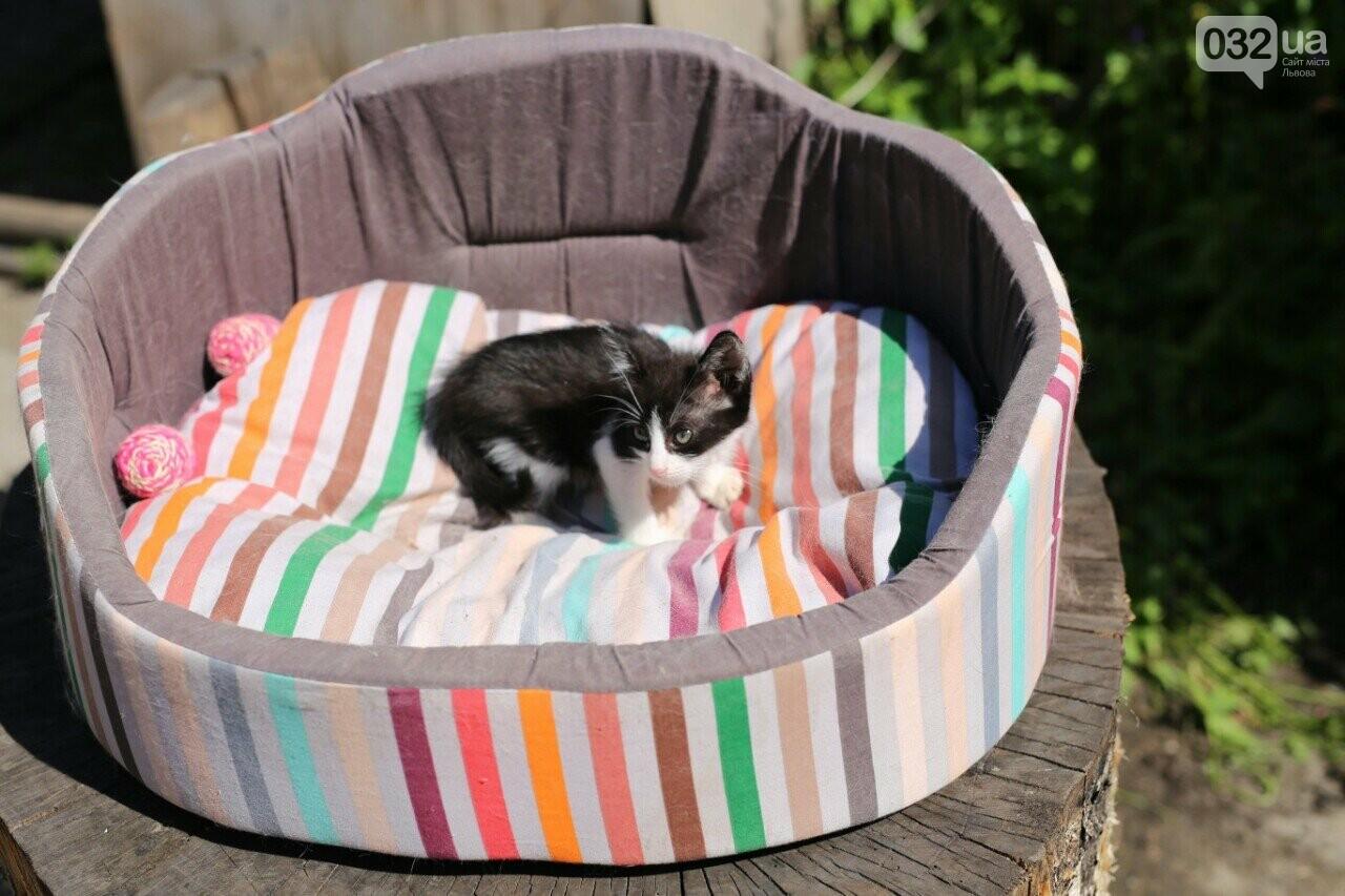 8 милих котиків чекають на добрих господарів у Домівці врятованих тварин, - ФОТО, фото-6