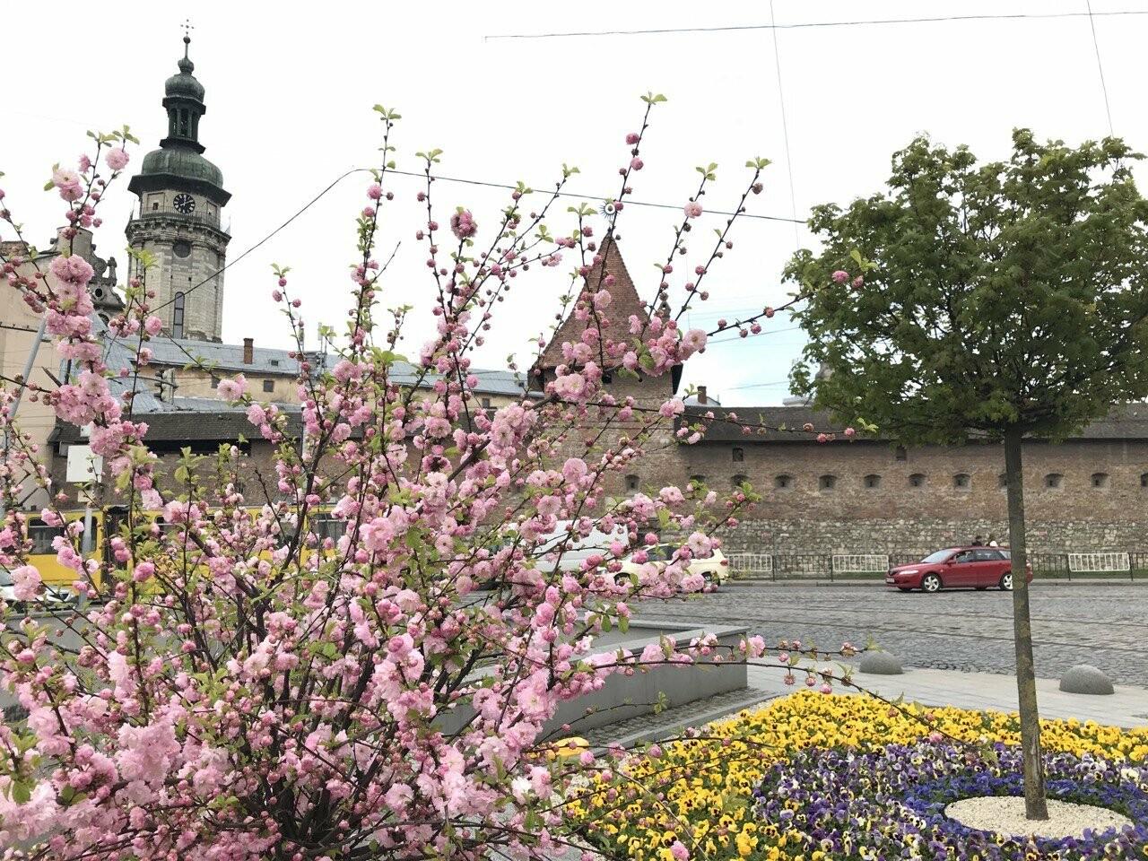 Площа Митна, Фото: 032.ua