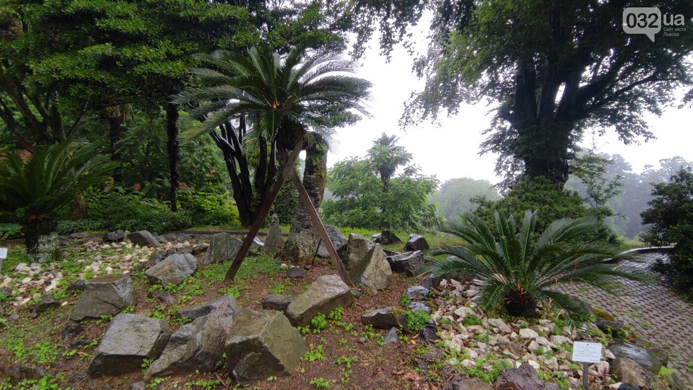 Дендрологічний парк Шекветілі у Грузії, Фото - 032