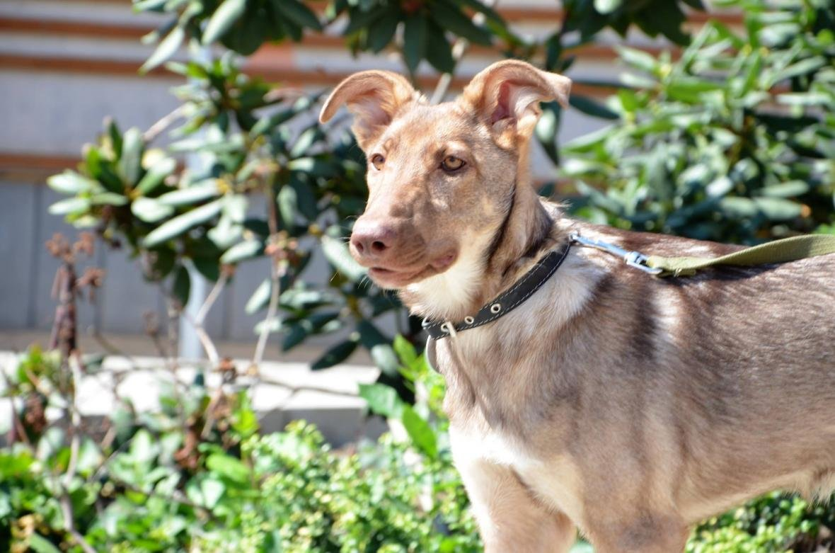 Обери собі друга: 10 чудових собак, які цього тижня шукають родину (ФОТО), фото-5