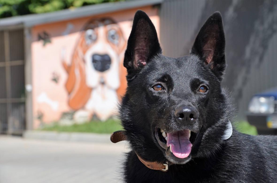 Обери собі друга: 10 чудових собак, які цього тижня шукають родину (ФОТО), фото-3