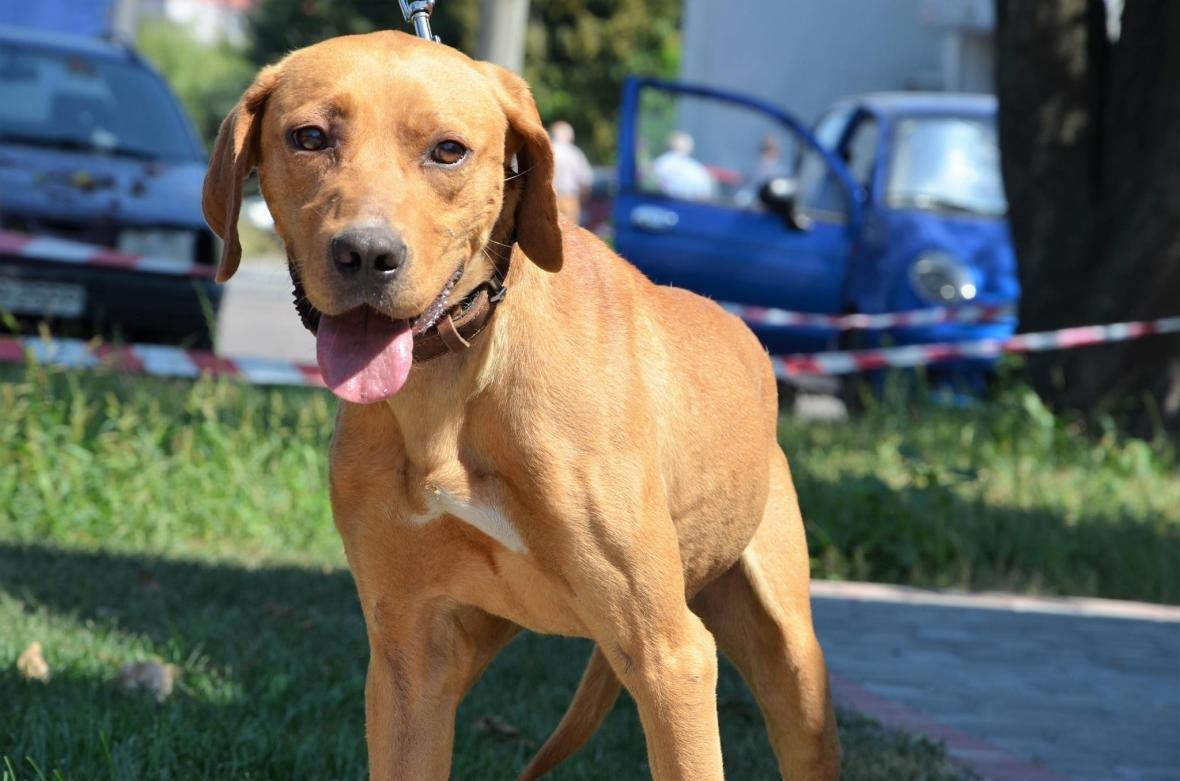 Обери собі друга: 10 чудових собак, які цього тижня шукають родину (ФОТО), фото-1