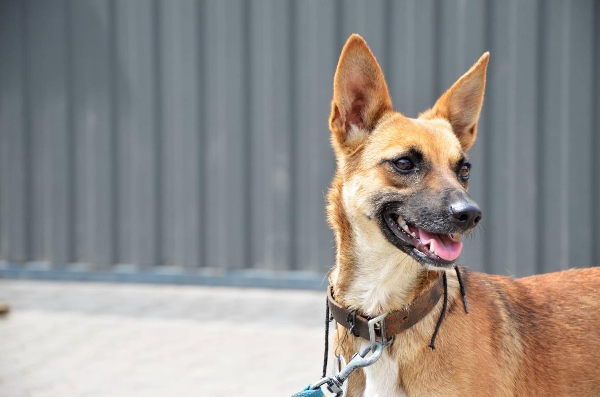 Обери собі друга: 10 чудових собак, які цього тижня шукають родину (ФОТО), фото-8