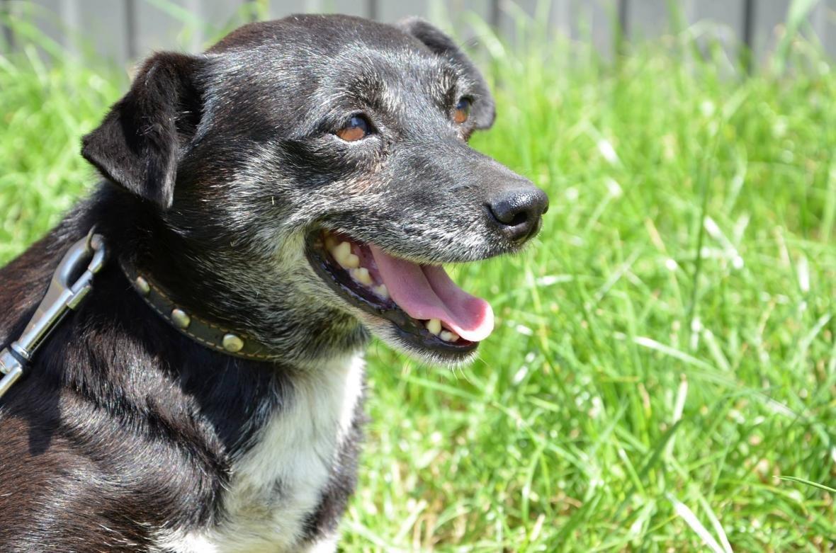 Обери собі друга: 10 чудових собак, які цього тижня шукають родину (ФОТО), фото-4