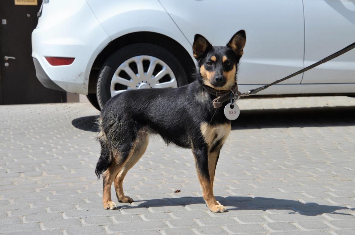 Обери собі друга: 10 чудових собак, які цього тижня шукають родину (ФОТО), фото-9