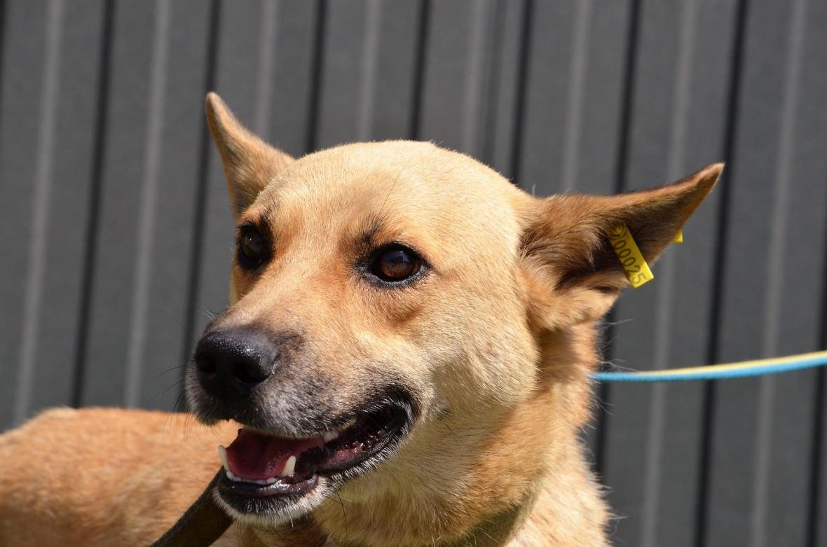 Обери собі друга: 10 чудових собак, які цього тижня шукають родину (ФОТО), фото-7