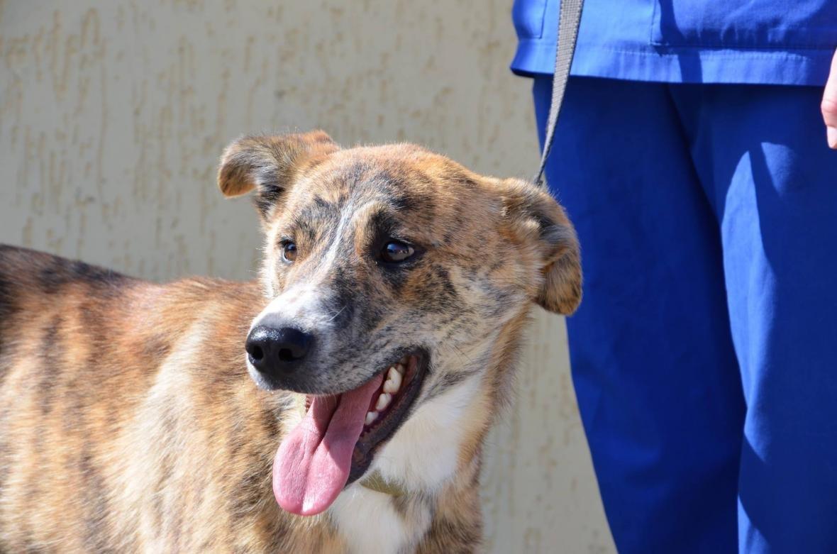 Обери собі друга: 10 чудових собак, які цього тижня шукають родину (ФОТО), фото-6
