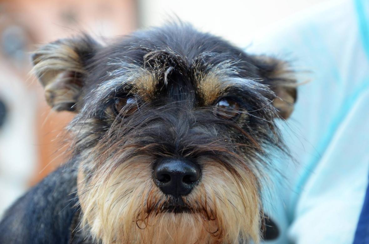 Обери собі друга: 8 чудових собак, які цього тижня шукають родину (ФОТО), фото-1
