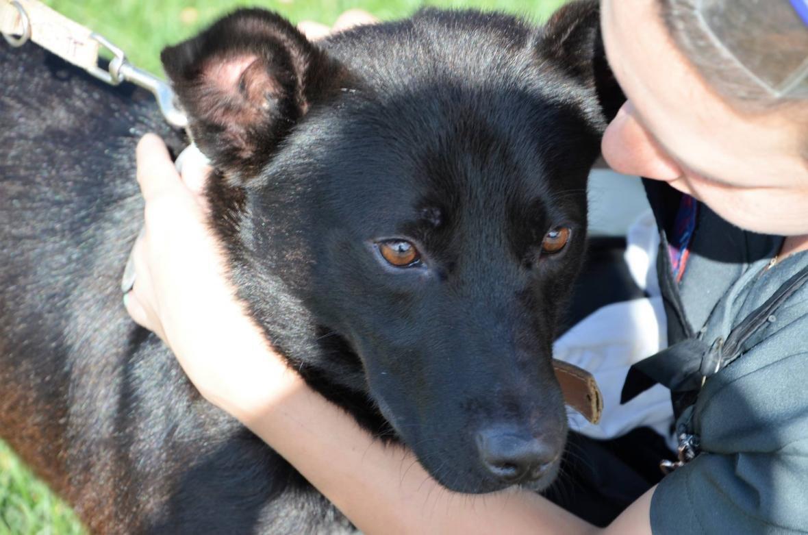 Обери собі друга: 8 чудових собак, які цього тижня шукають родину (ФОТО), фото-2