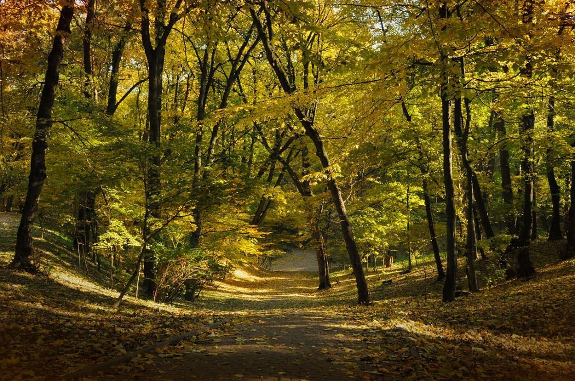 ТОП-9 місць у Львові для осінніх прогулянок, фото-1, Фото: commons.wikimedia.org