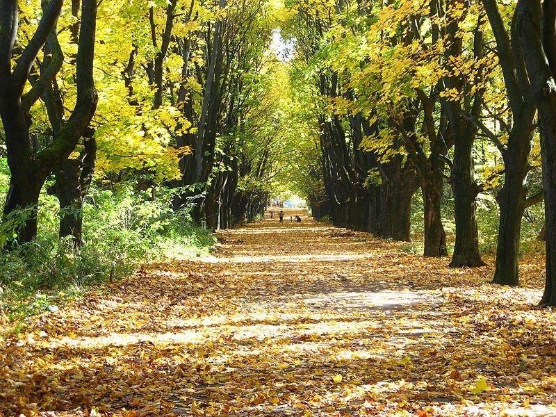 ТОП-9 місць у Львові для осінніх прогулянок, фото-8, Фото: ua.igotoworld.com