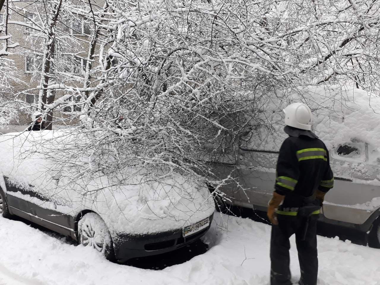 За вихідні у Львові впало близько сотні дерев: є розбиті авто. Фото , фото-1, Фото: ЛМР та ГУ ДСНС Львівщини