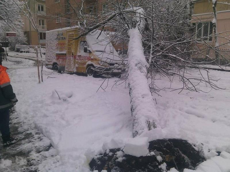 За вихідні у Львові впало близько сотні дерев: є розбиті авто. Фото , фото-2, Фото: ЛМР та ГУ ДСНС Львівщини