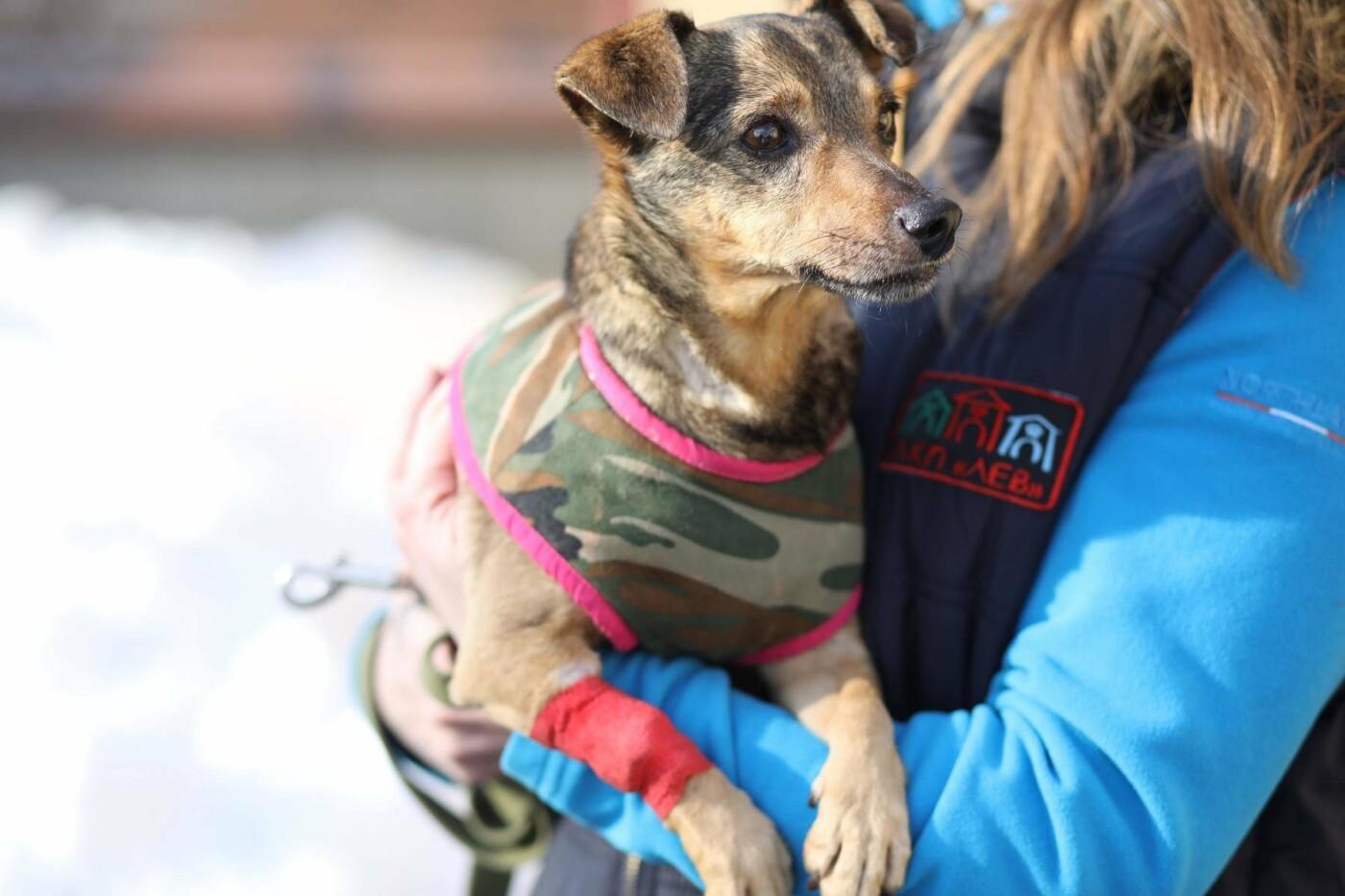 Обери собі друга: 12 неймовірно красивих собак, які шукають нову домівку у Львові. ФОТО, фото-10