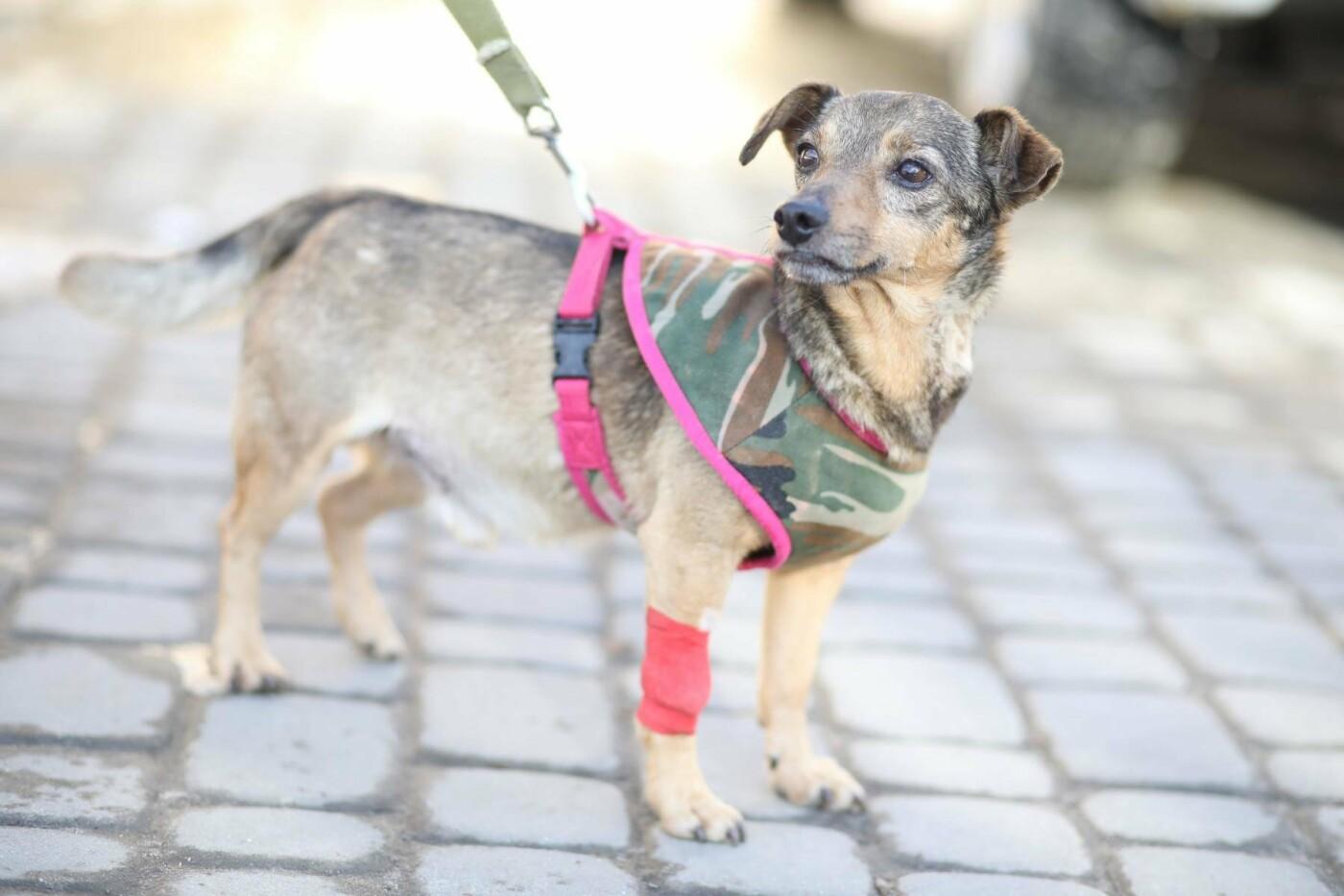 Обери собі друга: 12 неймовірно красивих собак, які шукають нову домівку у Львові. ФОТО, фото-9