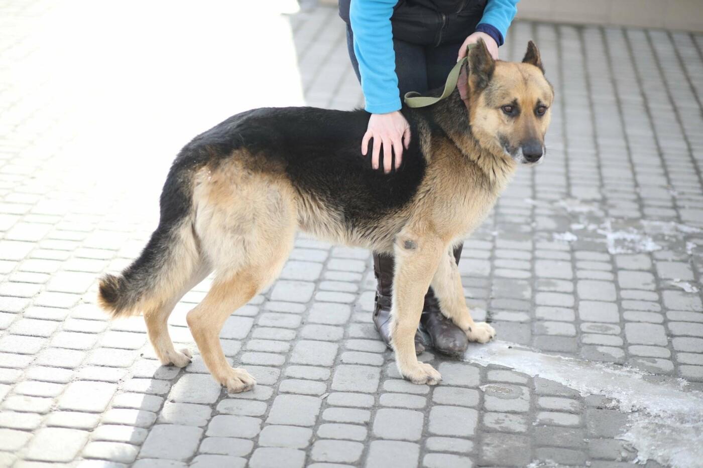 Обери собі друга: 12 неймовірно красивих собак, які шукають нову домівку у Львові. ФОТО, фото-4